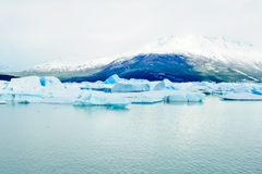 Iceberg in Lago Argentina Royalty Free Stock Images
