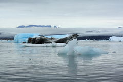 Iceberg Lagoon Royalty Free Stock Photo