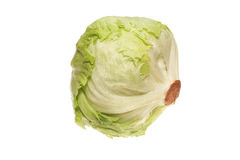 Iceberg lettuce. Isolated on a white background Stock Images