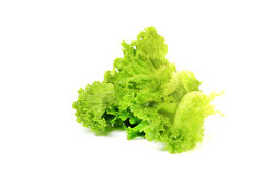 Iceberg lettuce Royalty Free Stock Photography