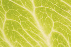 Iceberg lettuce leaf close up Royalty Free Stock Photos