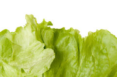Iceberg lettuce leaves Stock Photos