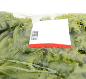 Iceberg lettuce in plastic bag package Royalty Free Stock Photography