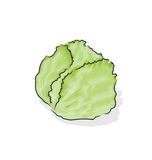 Iceberg lettuce. A vegetable is always found in salad bowl, sandwiches and wraps Stock Photo