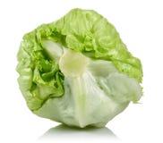 Iceberg lettuce. On white background royalty free stock images