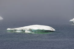 Iceberg Melting. At St Anthony Bight. Newfoundland Labrador on the Viking trail royalty free stock images