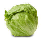 Iceberg salad - head of lettuce Royalty Free Stock Photo