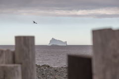 Free Iceberg Wood Posts And Seagull Royalty Free Stock Photography - 98168387