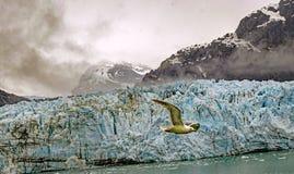 Iceberg y pájaro Imagenes de archivo