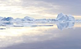 Icebergs. This image shows a bay full of icebergs located in the Northeast Greenland National Park Stock Image