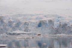 Icebergs en Antarctique Photographie stock libre de droits