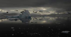 Icebergs en Antarctique Photo libre de droits