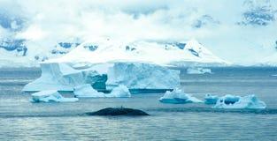 Icebergs en Antarctique Photo stock