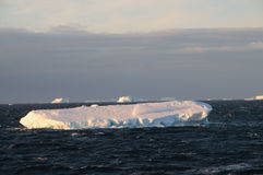Icebergs in the evening light Royalty Free Stock Photography