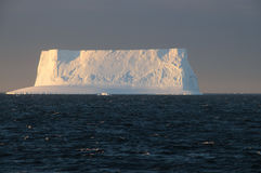 Icebergs in the evening light Royalty Free Stock Image