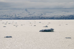 Icebergs floating in the arctic sea in Svalbard Royalty Free Stock Photo