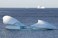 Icebergs with flock of gulls along the Avalon Peninsula, NL. Icebergs with flock of gulls along the Avalon Peninsula, Newfoundland and Labrador, Canada royalty free stock photography