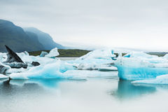 Icebergs in the glacial lake with mountain views. Royalty Free Stock Photo