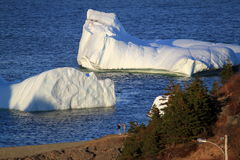 Icebergs in Harbour Royalty Free Stock Photos