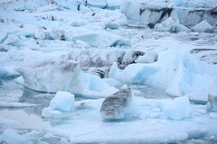 Icebergs in iceland Royalty Free Stock Photography
