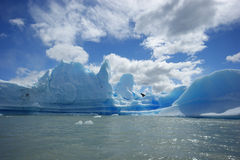 Icebergs in Patagonia Royalty Free Stock Photo