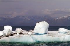 Icebergs in the sea Stock Photos