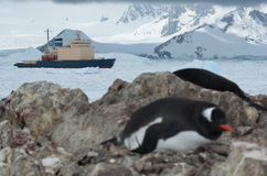 Icebreaker sailing on the scored ice Antarctic Strait near the p. Enguin colony spring day Stock Photography
