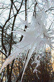 Icecle de la forma extraña en ramas de árbol Fotografía de archivo