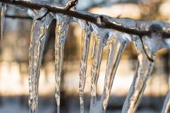 Icecle en sola rama Visión horizontal Macro Fotografía de archivo libre de regalías