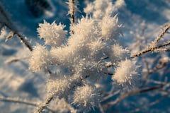 iced Royaltyfri Foto