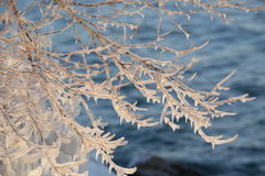Iced branch above rippling lake waters Royalty Free Stock Photography