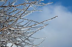 Iced branches against a Blue Sky. A grouop of tree branches covered with ice after an ice storm framed against a blue sky Stock Photo