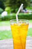 Iced chrysanthemum tea (flower tea) Royalty Free Stock Photos