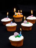 Iced cupcakes  Royalty Free Stock Images