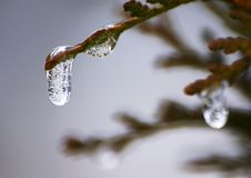 Iced drop Royalty Free Stock Photo