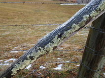 Iced fence post Stock Images