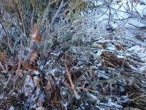 iced filialer Royaltyfria Foton