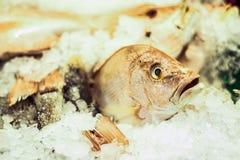 iced fisk Royaltyfria Bilder