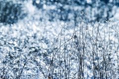 Iced grass on the lighting refection background Stock Photography