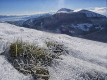 Iced grass in winter, mount Motette, Appenines, Umbria, Italy Royalty Free Stock Photos