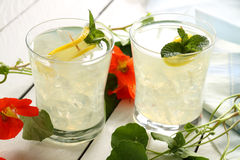 Iced Lemon Drinks. Delicious iced lemon drinks with sliced fresh lemon and mint stock image