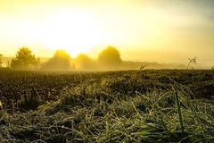 Iced morning grass. Fields stock image