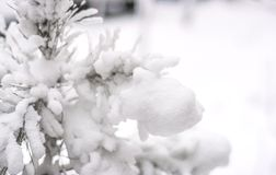Iced over tree branch. Selective focus Stock Photography