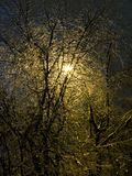 The iced over trees. Winter night. Sleet. Royalty Free Stock Photography