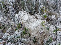 Iced plants in the Belgian Ardennes. Iced plants and leaves in the Belgian Ardennes stock photos