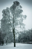 Iced rain in Moscow parks, natural disaster Stock Images