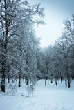 Iced rain in Moscow parks, natural disaster Stock Photography