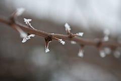 iced taggar Royaltyfri Fotografi