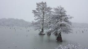 iced tree arkivbilder