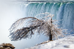 Iced tree. Tree covered by thick layer of iced mist, Niagara Falls Horseshoe on background Royalty Free Stock Image